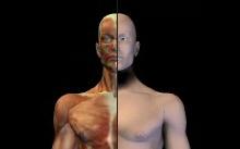 HadererMuller.com_Anatomy