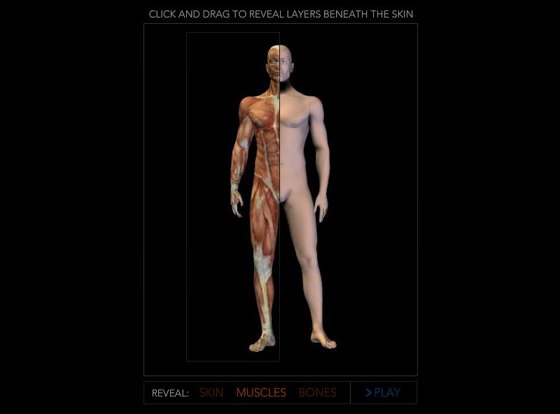 anatomyViewer_Post